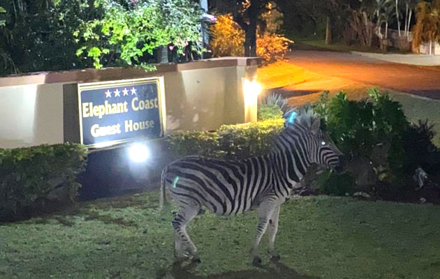 Elephant Coast Guesthouse, Luxury, Bed & Breakfast, Accommodation, St Lucia, honeymoon, hippo, wildlife, weddings, Maputuland, KwaZulu-Natal